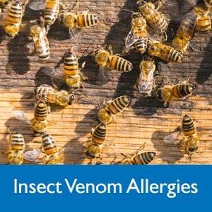 Insect venom allergies