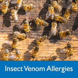 Insect venom allergies
